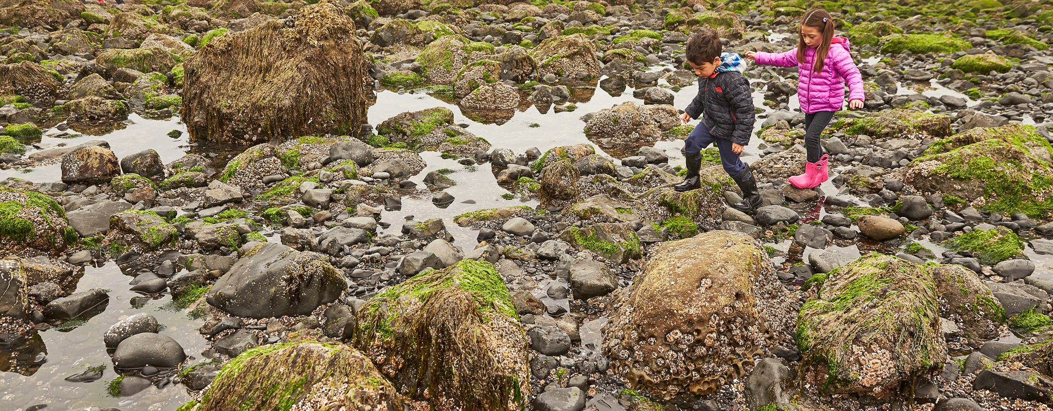 Kids playing in the tide pools in Cannon Beach, Oregon.