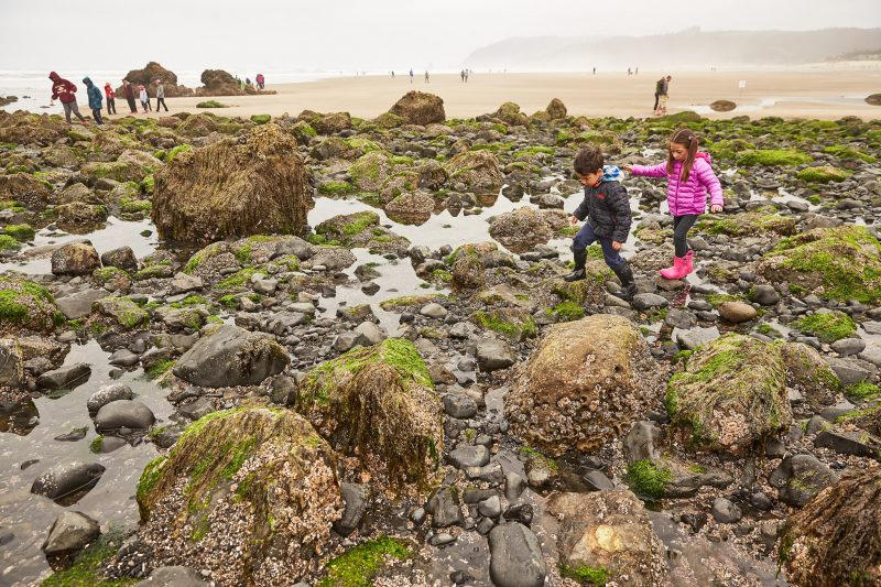 Kids playing in tide pools in Oregon.
