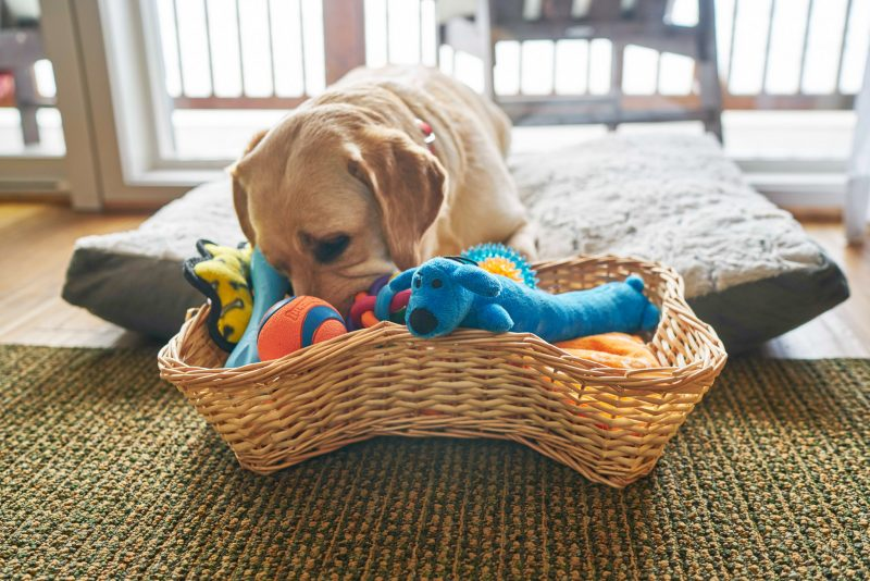 Pet baskets available